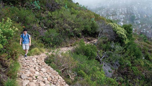 discover where's cool in Cape Town mountain
