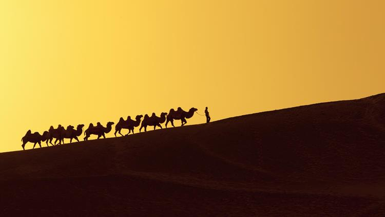 Camel train, Silk Road in China