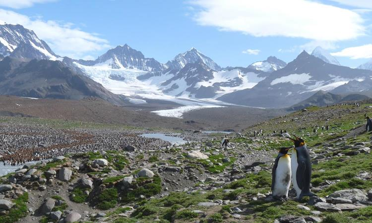 South Georgia Island, Antarctica