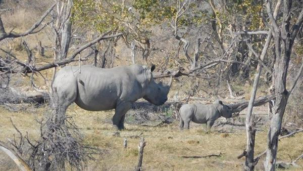 Rhino Conservation Program, Botswana
