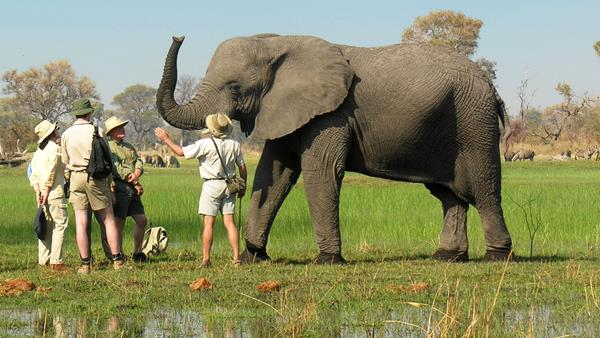 The Elephant Outreach Program, Botswana