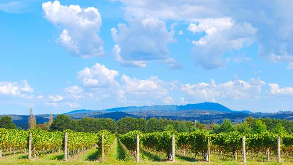 48 hours in Melbourne, A&K, Yarra Valley