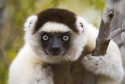 Small Group: A Naturalist's Guide to Madagascar with Dr. Charlie Gardner