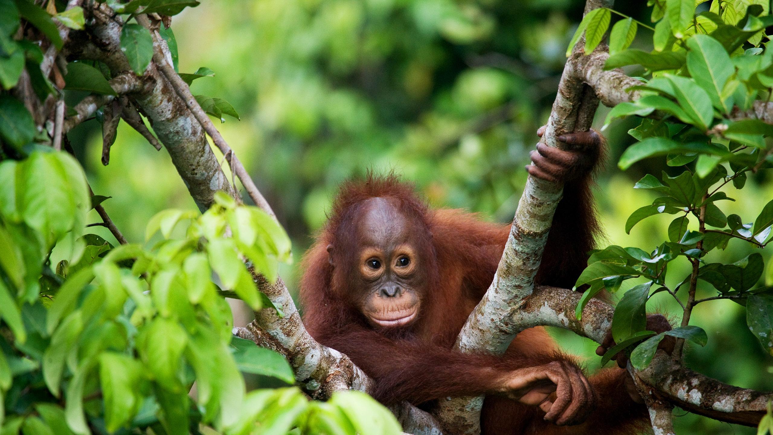 Borneo Wildlife Adventure Abercrombie Kent