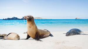 Galapagos Islands, South America